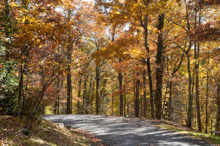 Fall Trail in North Carolina Stock Photo - 16693928