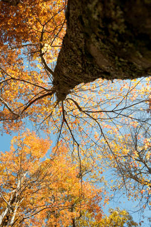 Under Fall Tree Stock Photo - 16693924