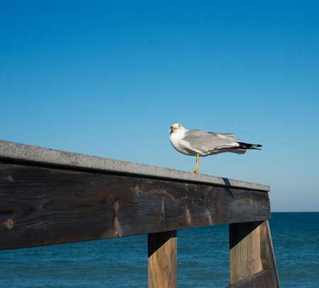 Seagull on Boardwalk Stock Photo - 17677963