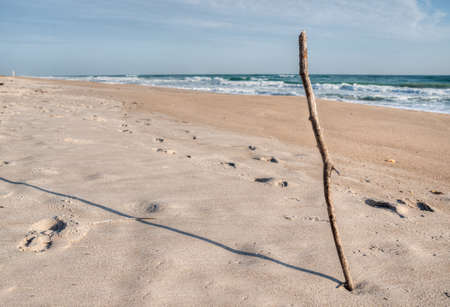 Canaveral National Seashore in Florida Stock Photo - 18445483