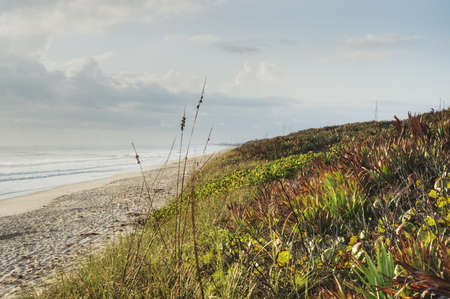 Canaveral National Seashore in Florida Stock Photo - 18445482