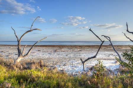 Merritt Island Wildlife Refuge Stock Photo - 18445440