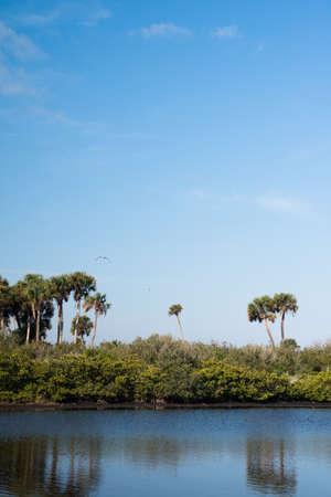 Merritt Island Wildlife Refuge Stock Photo - 18445437