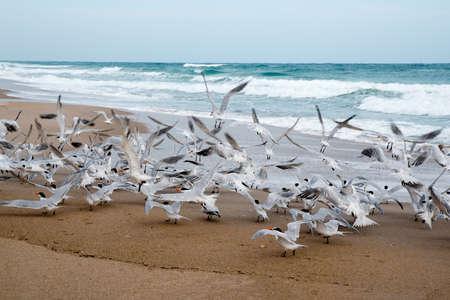 Birds on Beach Stock Photo - 18445442