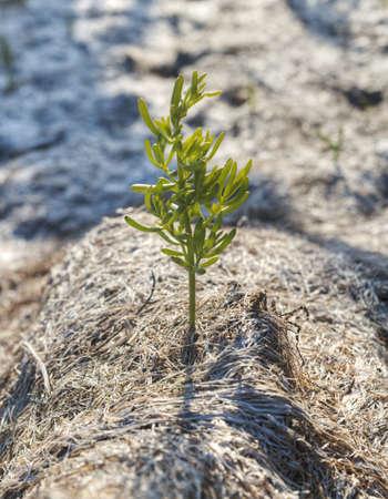 Plant Stock Photo - 18445368