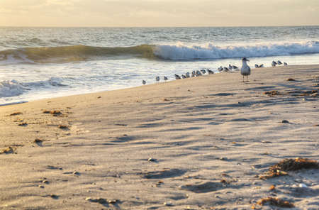 Morning at Canaveral National Seashore Stock Photo - 18445481