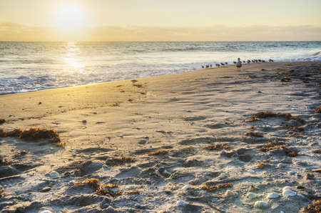Morning at Canaveral National Seashore Stock Photo - 18445525