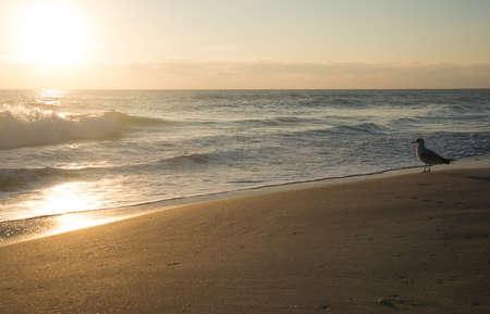 Morning at Canaveral National Seashore Stock Photo - 18445371