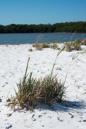 Beach in the Ten Thousand Islands Stock Photo - 19502584