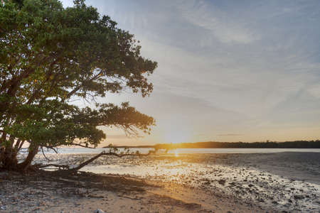 Sunrise in the Everglades Stock Photo - 19502589