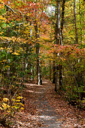 Nature Trail in North Carolina photo