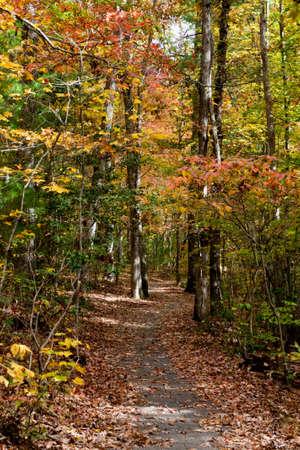 Nature Trail in North Carolina Stock Photo - 20365086