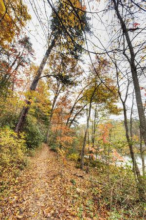 Nature Trail in North Carolina Stock Photo - 20365093