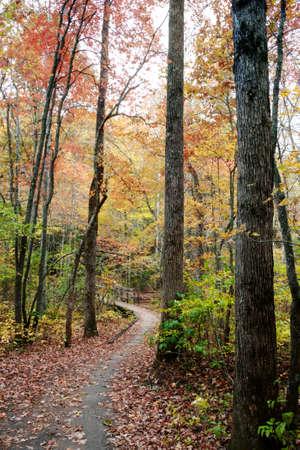 Nature Trail in North Carolina Stock Photo - 20365075