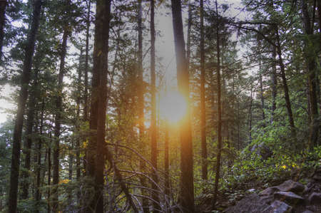 Sunrise in Forest Stock Photo - 21889453