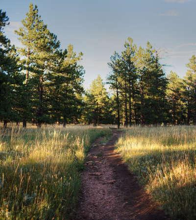 Trail in Boulder, Colorado Stock Photo - 23308516