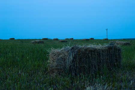 hay field: Hay Field Archivio Fotografico