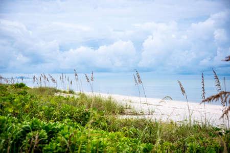sea oats: Bonita Springs, Florida