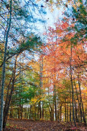 north carolina: Fall Trees in North Carolina