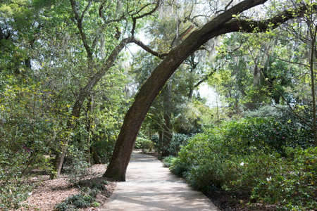 Nature Trail in Florida