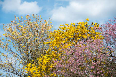 Tree with Colorful Flowers