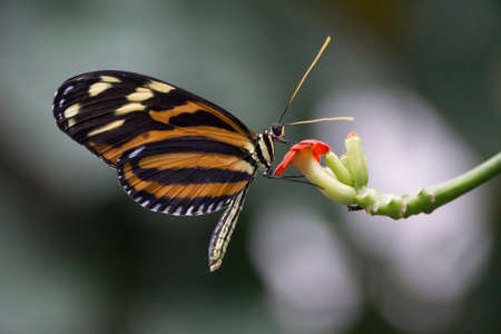 Close up of Butterfly at Botanical Gardens in Cleveland, Ohio Stock Photo
