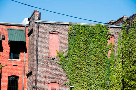 Grunge Ivy Wall
