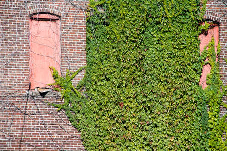 ivy wall: Grunge Ivy Wall