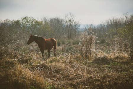 Wild Horse in Florida