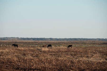 Wild Horses in Florida