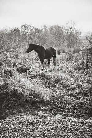 Wild Horse on Florida Landscape