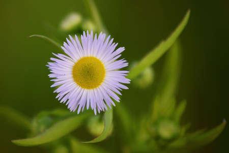 White flower on dark green background. Center... photo