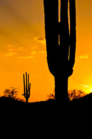 arizona sunset: Arizona Sunset