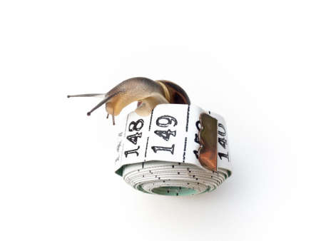 edible snail: A snail on a tape measure, on a white background. Health concept.
