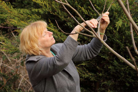 fig tree: Mature woman pruning fig tree