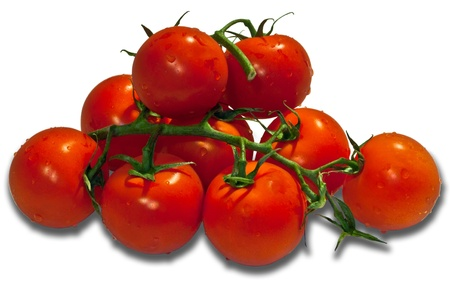 Red tomatoes on a branch, isolated on a white background