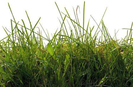 Green grass cut out isolated on white background.