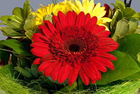 Bouquet of red and yellow flowers on the background of greenery