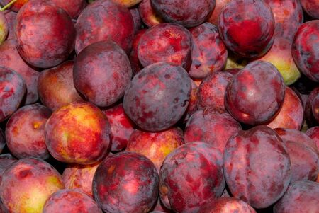 Red plum, gathered in the garden area