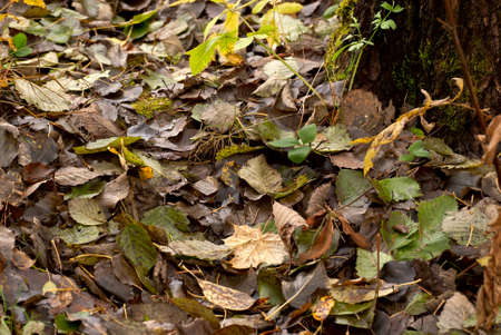 The autumn leaves on the damp ground