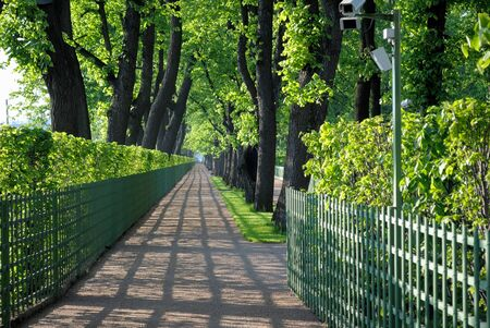 One of the alleys of the Summer Garden after restoration  The City Of Saint-Petersburg