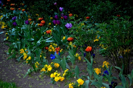 A flower bed of flowers in the late evening, in one of the parks of Saint-Petersburg