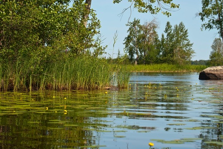 View of the forest lake with thickets of sedge and the water-lilies on the water  Stock Photo