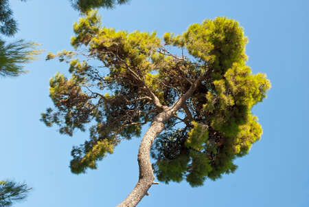 A green tree against a blue sky on a bright sunny day  Stockfoto