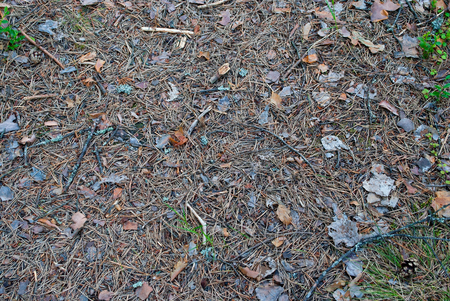 dry leaves, pine needles, twigs and branches on the forest path. photo