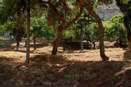 Shady park of green silver firs at the foot of the ancient Acropolis on a hot summer day. Athens, Greece. Stock Photo