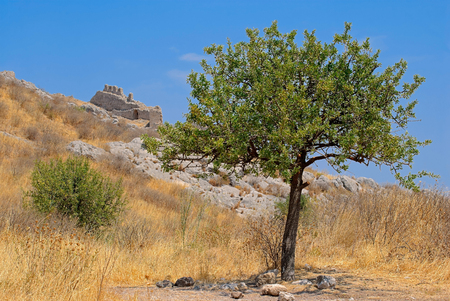 Lonely pomegranate tree against the sky and the ruins of ancient Corinth on a hot summer day.