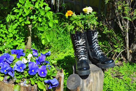 Decorative flowers, planted in old shoes, in the Tauride Garden in the city of Saint-Petersburg. Stock Photo