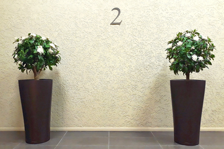 Two bouquets of decorative white flowers in tall dark pots standing on the floor against the wall with the number two. Stock Photo