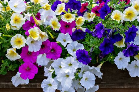 Bright white, pink and blue flowers on green leaf background.